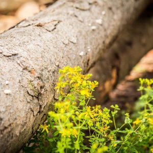 Lesnická výroba a služby 1