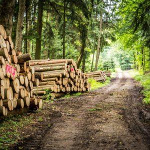 Lesnická výroba a služby 4