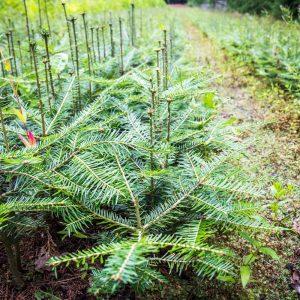 Lesnická výroba a služby 8